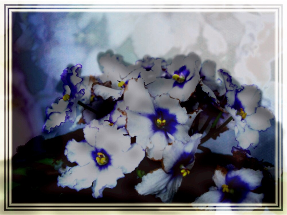White African Violet by Judi Taylor