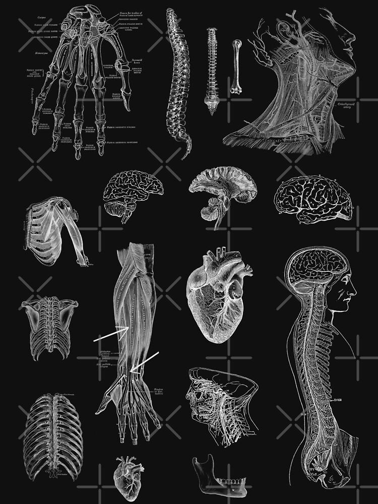 Vintage Anatomy Print  by StilleSkygger