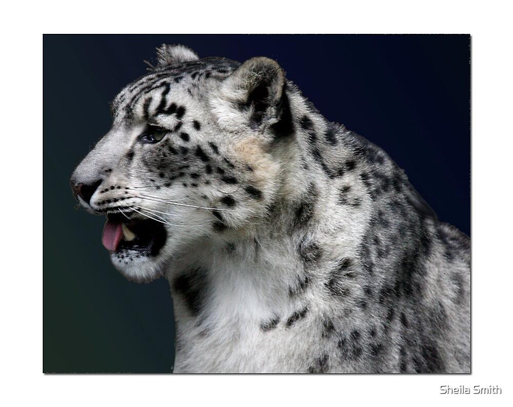 Snow Leopard by Sheila Smith