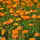 Orange by Nature Flicks
