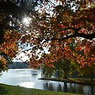 Autumn by Nature Flicks