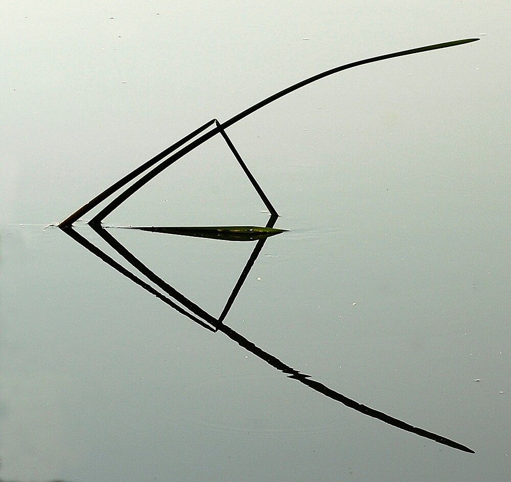 Reed by Stephen faulkner