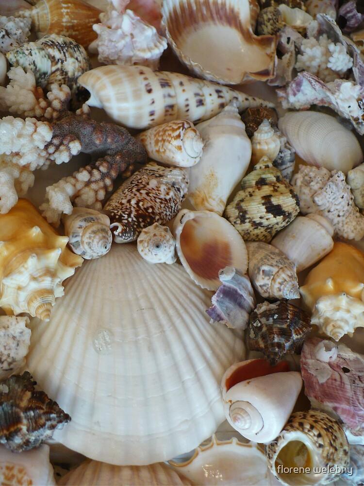 Shells Of Sanibel by florene welebny