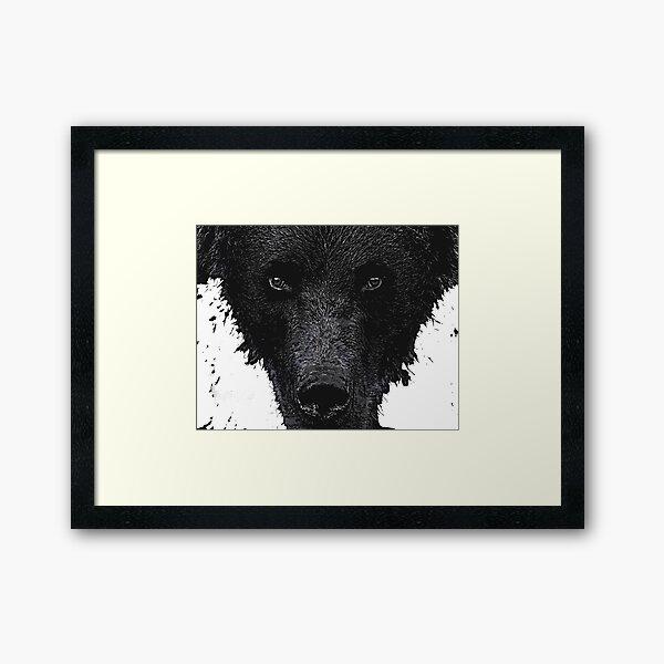 Bear Stare  Framed Art Print