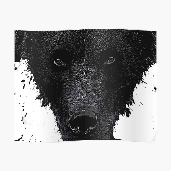 Bear Stare  Poster
