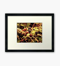 Fruits of the Forest Framed Print