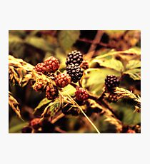 Fruits of the Forest Photographic Print