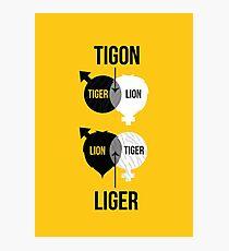 Tigon, liger Photographic Print