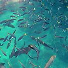 Feed the Fish time by Chris Cohen