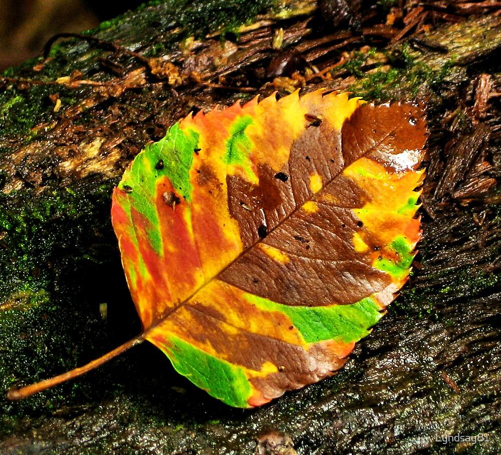 Colorful Leaf  by Lyndsay81