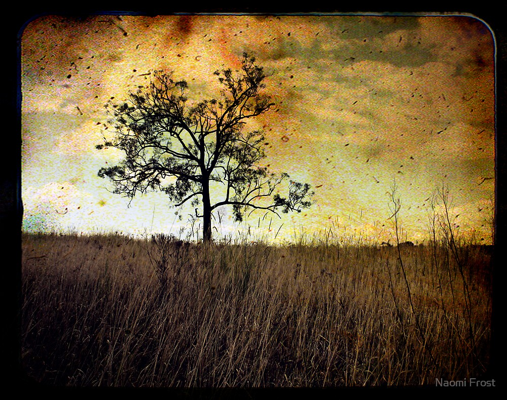 Memory Of Trees by Naomi Frost