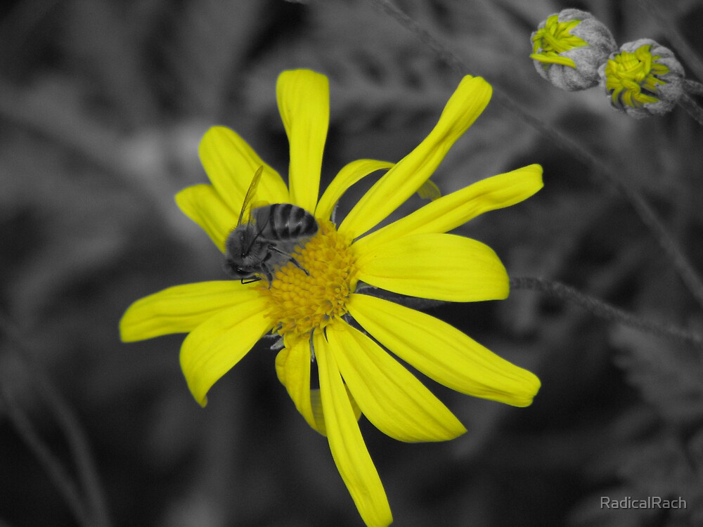 Bumble bee by RadicalRach