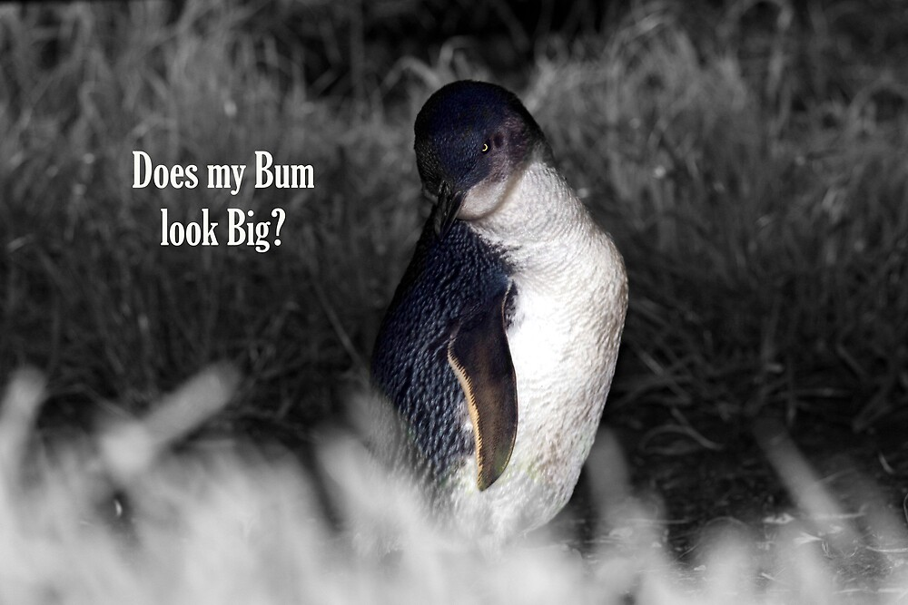 Does my Bum look Big? (GC) by Dave Law