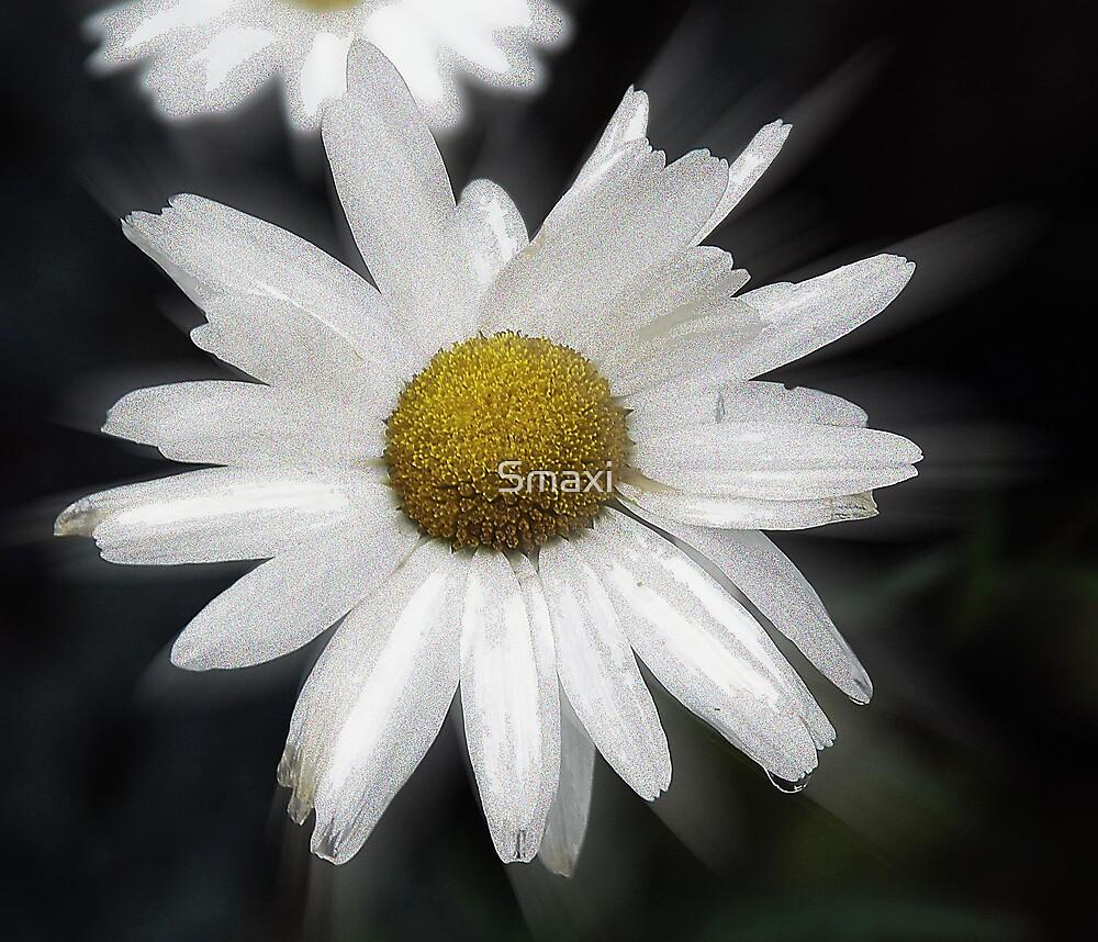 Fuzzy Daisy by Smaxi