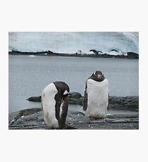 Penguin I Photographic Print