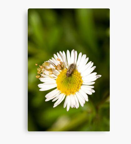 Bug on Flower Canvas Print