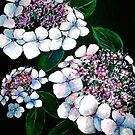White Hydrangeas ... by ©Janis Zroback