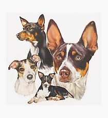 Rat Terrier Photographic Print