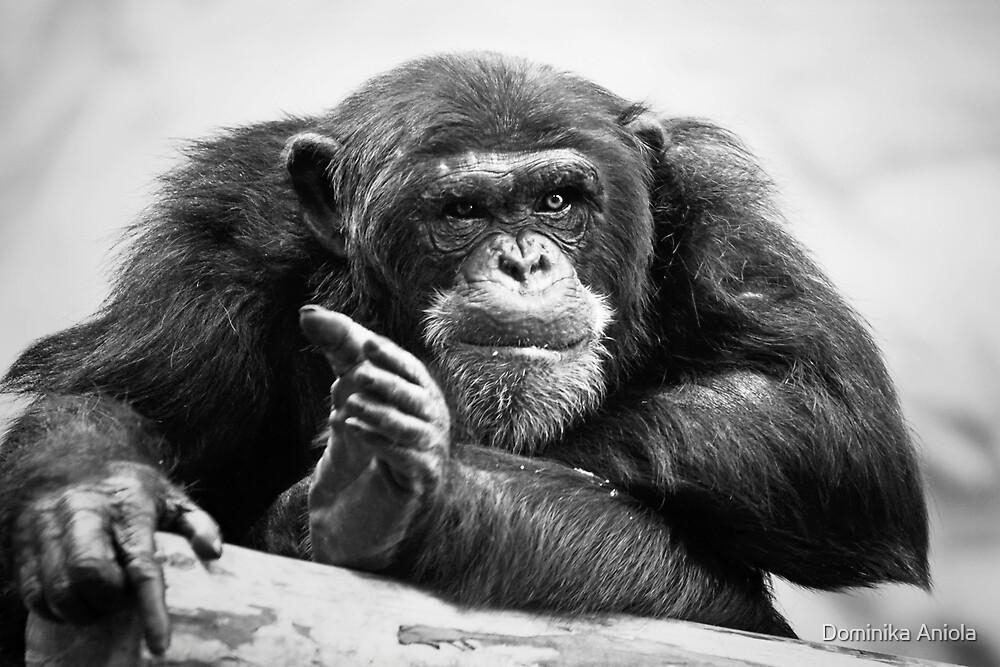 You talking to me? by Dominika Aniola