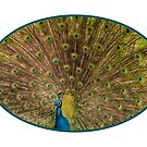 Peacock Pride by Bonnie T.  Barry