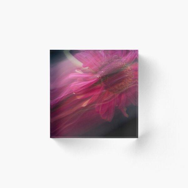 Fleur Blur-Abstract Pink Gerbera Daisy Acrylic Block
