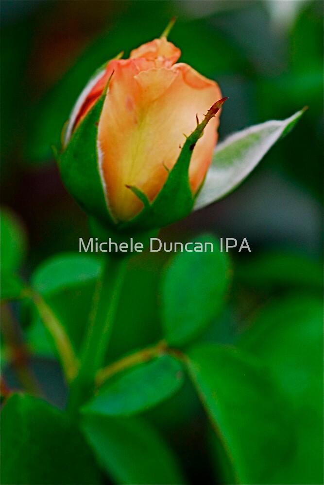 Budding Orange by Michele Duncan IPA