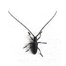 pine sawyer bug by Veera Pfaffli