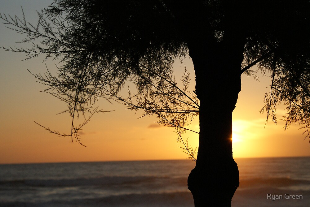 Sunset Tree by Ryan Green