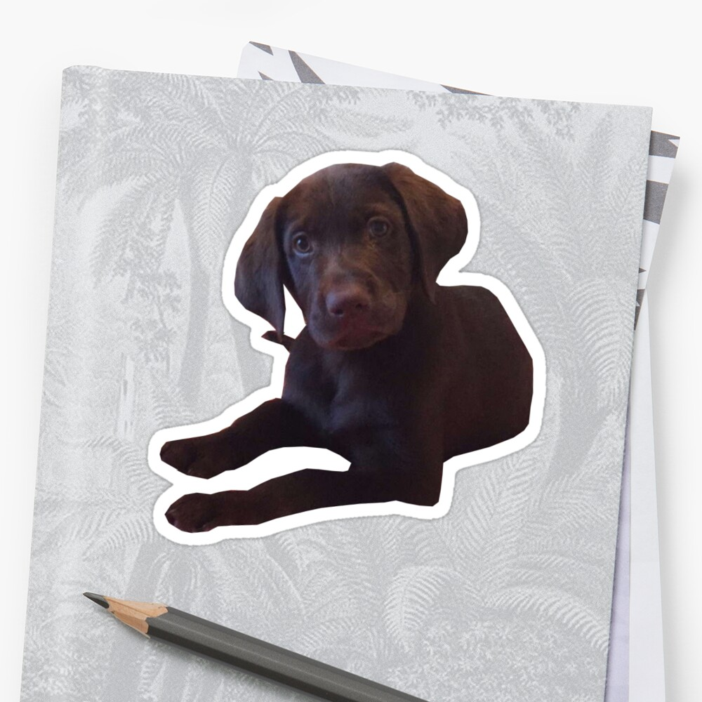 Marty the chocolate lab by tziggles