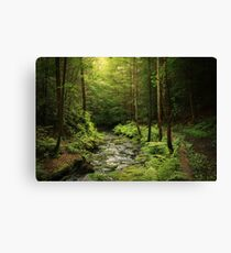 Loki's Forest Canvas Print