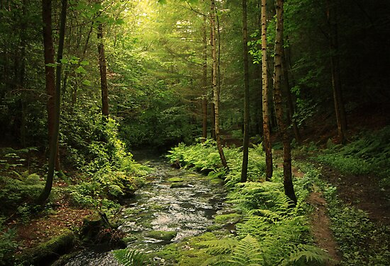 Loki's Forest by Becca  Cusworth