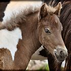 Curious Foal by Karen Peron