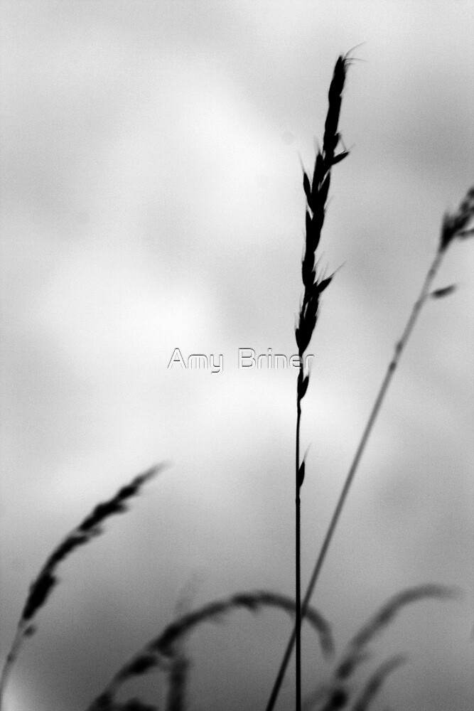 Silhouette by Amy  Briner