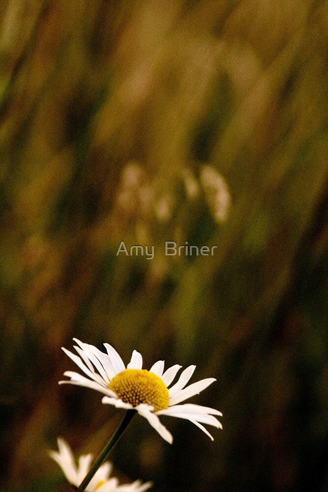 Simple Flower by Amy  Briner