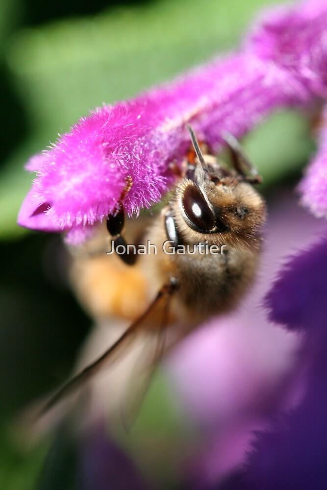 Honeybee on flower by Jonah Gautier