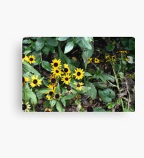 Sunny (flower) Days Canvas Print