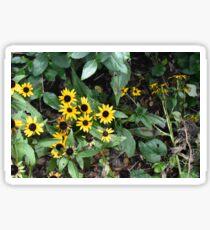 Sunny (flower) Days Sticker