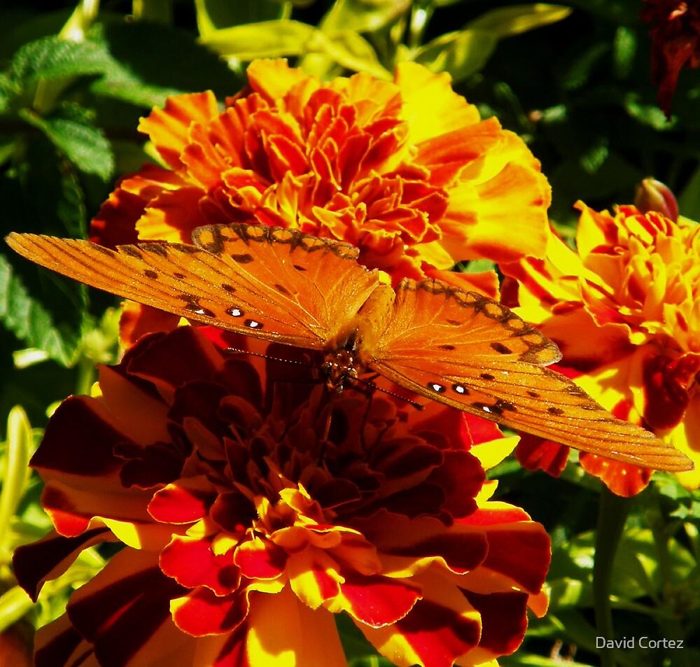 Butterfly by David Cortez