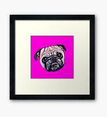 Butch the Pug - Pink Framed Print