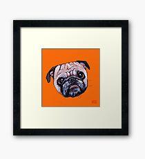 Butch the Pug - Orange Framed Print