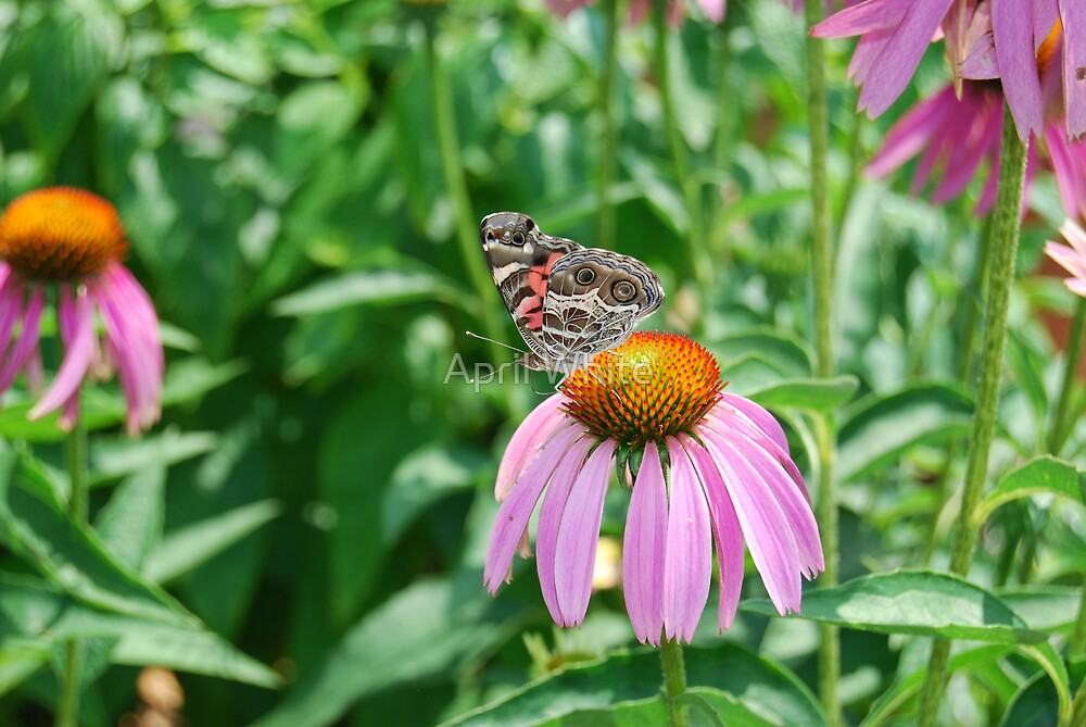 Cone Flower & Friend by April White