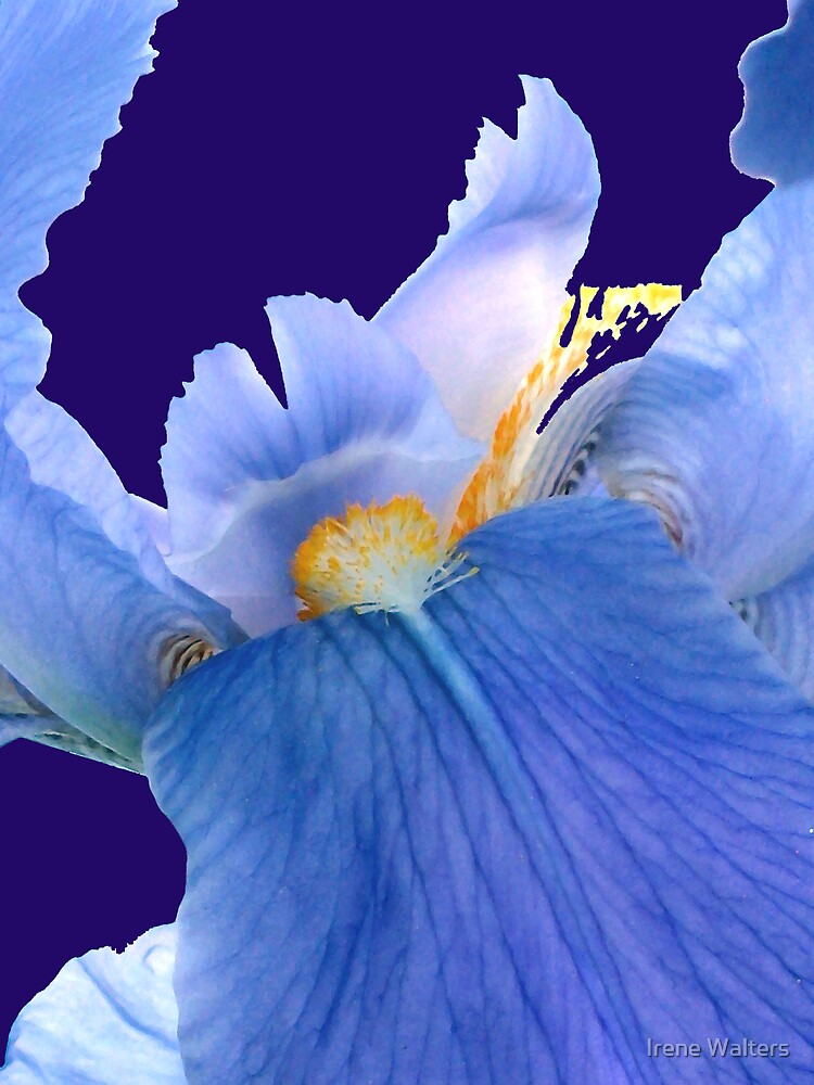Brilliant in Blue by Irene Walters