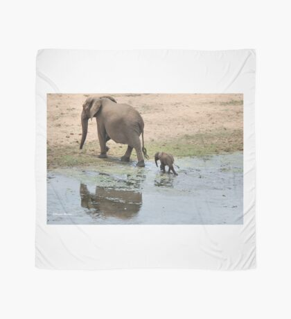 WHEE ARE WE GOING MOM - THE AFRICAN ELEPHANT – Loxodonta Africana Scarf