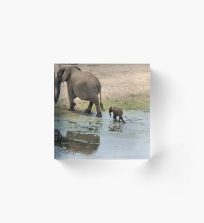 WHEE ARE WE GOING MOM - THE AFRICAN ELEPHANT – Loxodonta Africana Acrylic Block