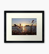 Sunset through bullrushes Framed Print