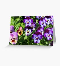 Purple pansies  Greeting Card