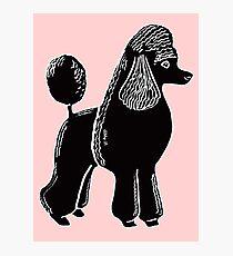 Black Standard Poodle Photographic Print