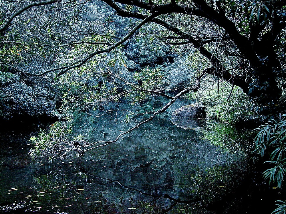 nature view by alfarman