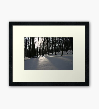 The Silent Forest Framed Print