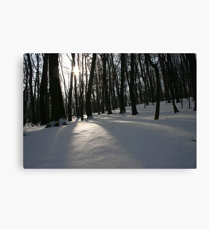 The Silent Forest Canvas Print